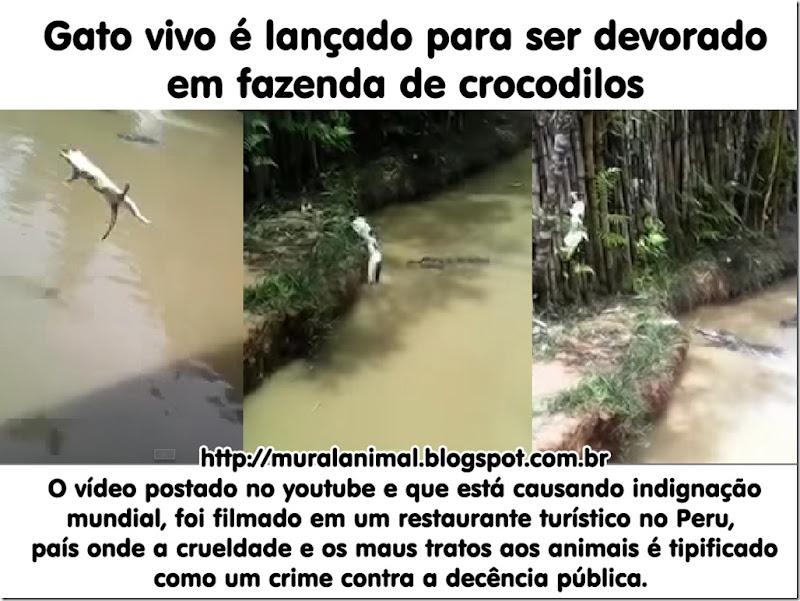 gato-jogado-crocodilo