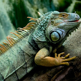 Eddy Maerten by Eddy Maerten - Animals Reptiles