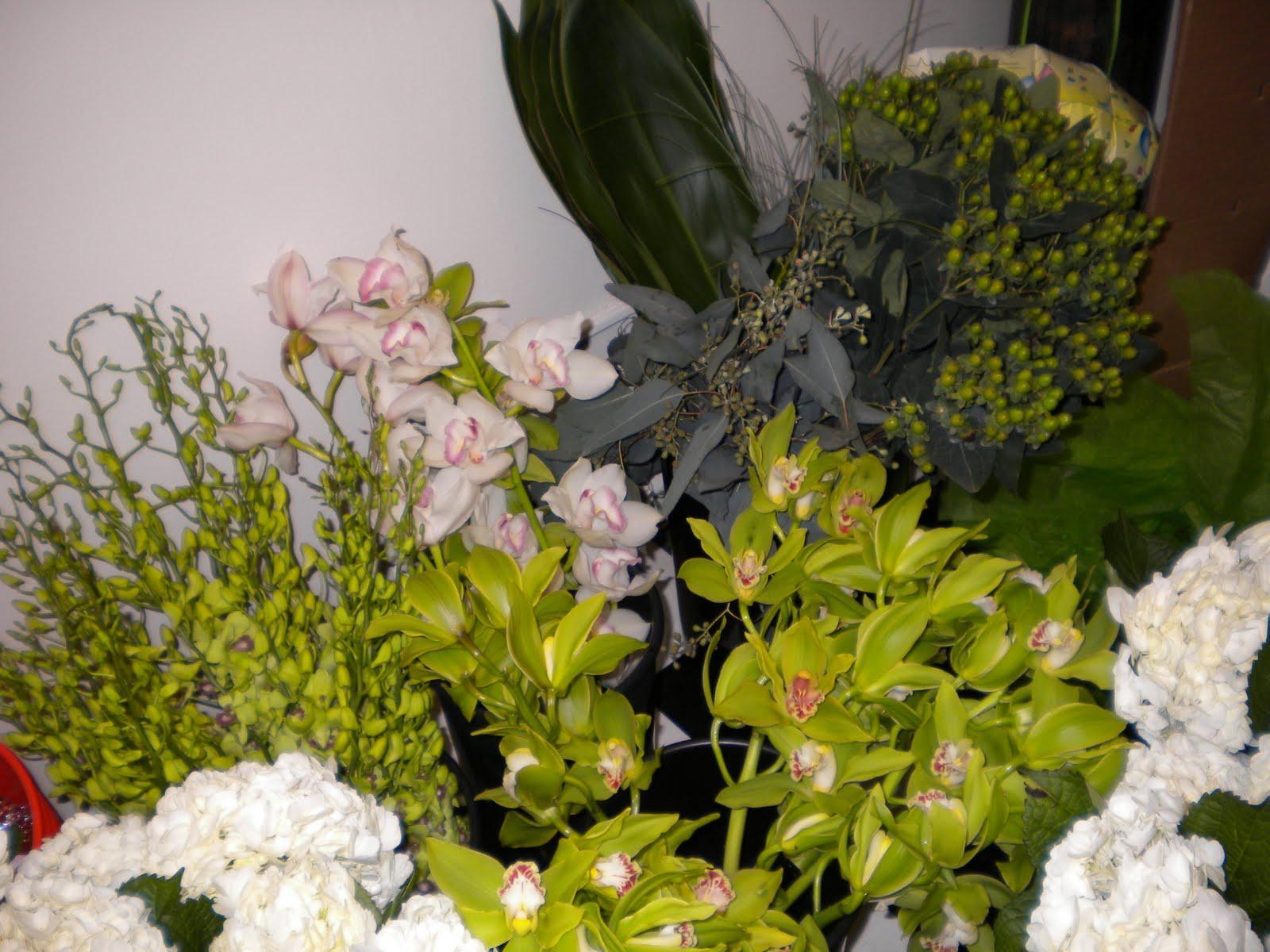 white cymbidium orchids,