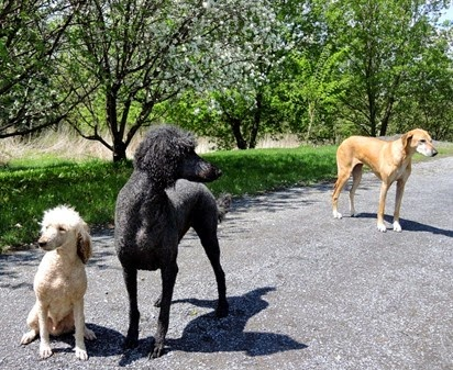 20150512_141755-dogs