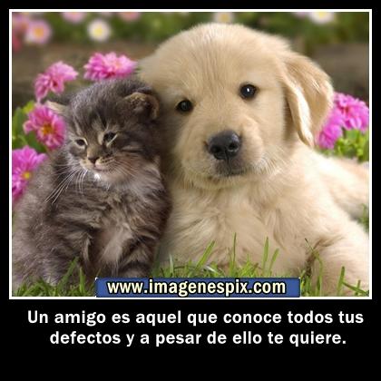 Imagenes Con Frases De Amistad Para Facebook - Imagenes bonitas con frases de amistad para facebook