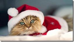 77- gatos navidad (6)- buscoimagenes