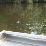 Our Airboat Adventure ride in New Orleans to see the swamps and gators 07242012-35