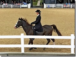 KY horse park 096
