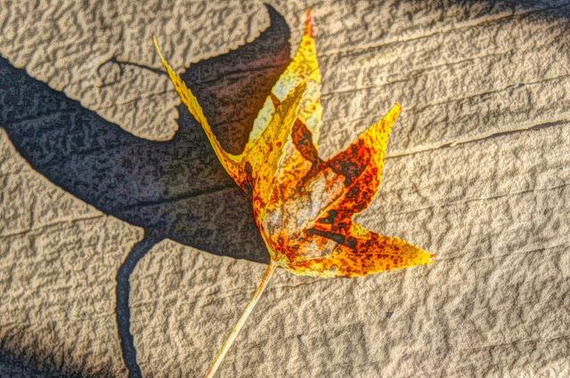 leaf on the floor