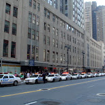many NYPD police cars in New York City, New York, United States