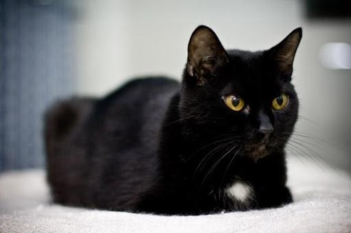 Черная кошка колдовство