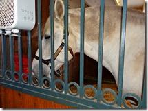 KY horse park 057