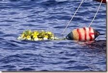 Strage del Mediterraneo causata da collisione