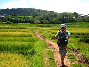 Rice fields everywhere!