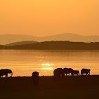 Karibasee, Elefanten im Sonnenuntergang © Foto: Ulrike Pârvu | Outback Africa Erlebnisreisen