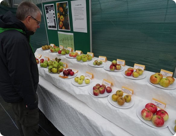 Visitor Mark Ray inspects some of the apples
