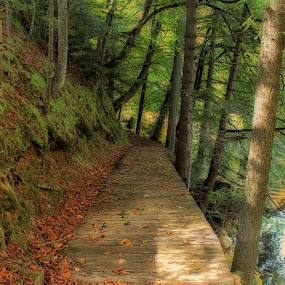 Forest walkway by Marko Dragović - Landscapes Forests ( path, trees, lake, forest )
