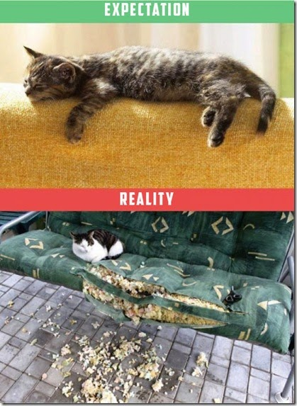cats-expectations-reality-004