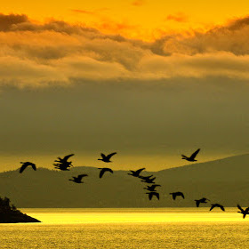 geese01.JPG