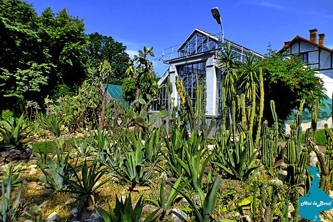sector america gradina botanica cluj vara