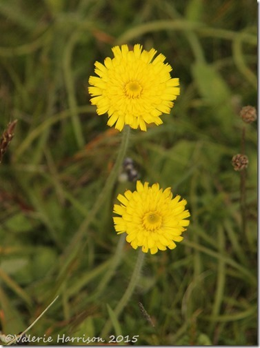 35-flower