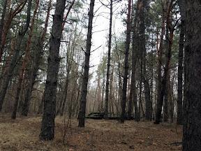 лес22.jpg