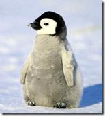 [penguins]