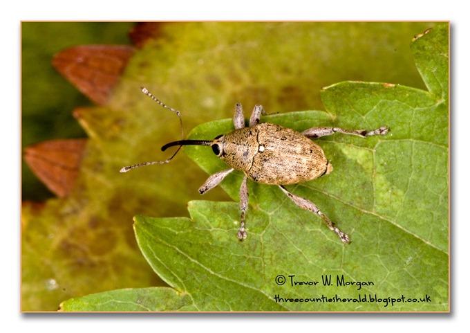 Bug Affair 5 Weirdest  Acorn