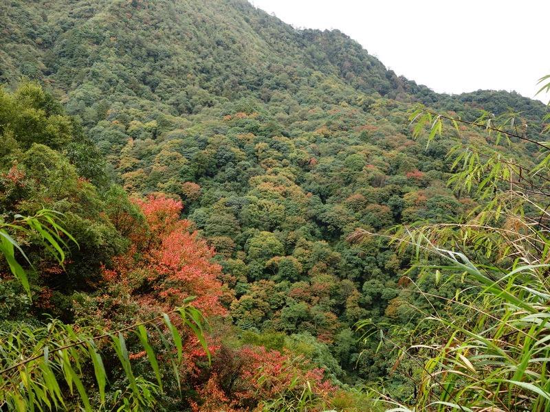 2013_1126-1129 鹿林山-1_180