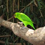 A lorikeet at the Nashville Zoo 09032011e
