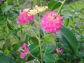 Entry bunga dan Hari Ibu