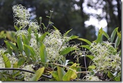 Feathery plants-1