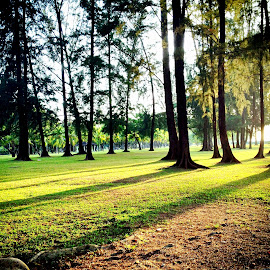 Long shadows by Janette Ho - Instagram & Mobile iPhone ( renewal, green, trees, forests, nature, natural, scenic, relaxing, meditation, the mood factory, mood, emotions, jade, revive, inspirational, earthly,  )