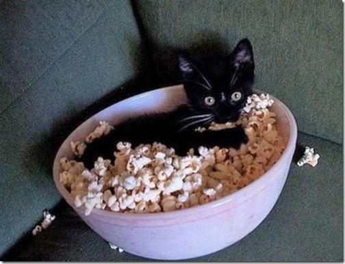 gatos sitios para esconderse (6)