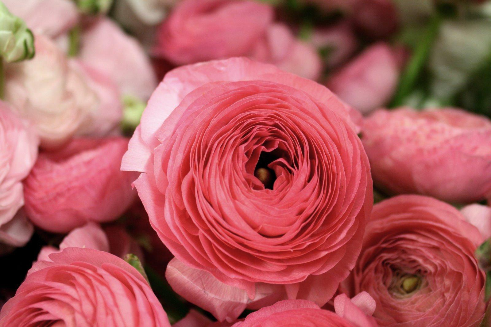 I think ranunculus flowers