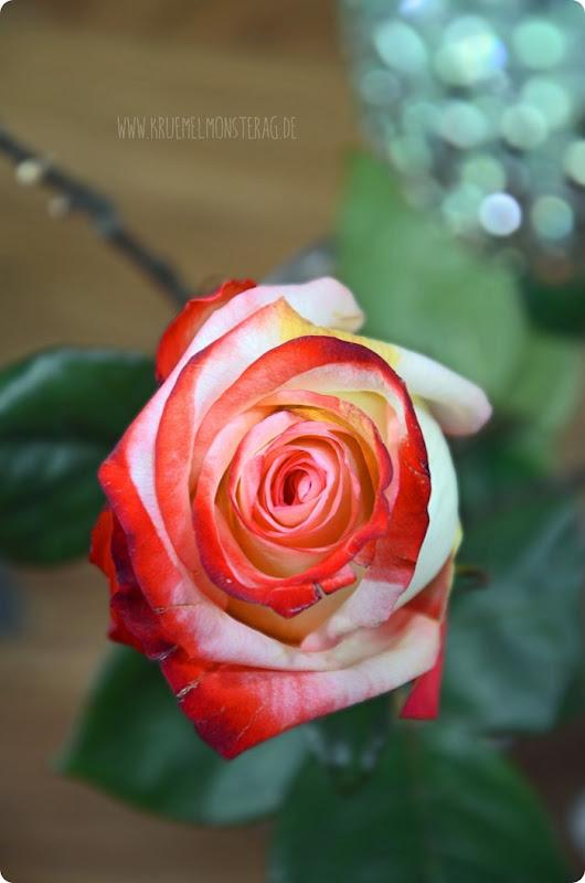 GdW 0305 Rosenreicher Besuch vom Lieblingstantchen