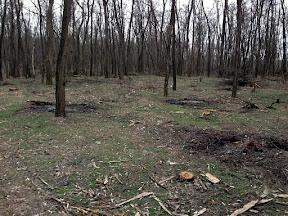 лес33.jpg
