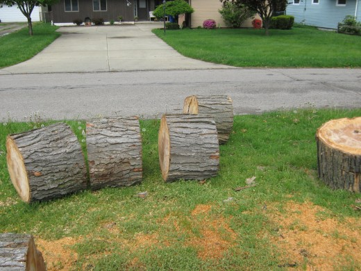 chunks of trunk
