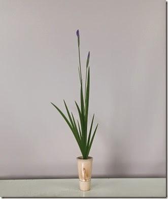 【生花】花菖蒲