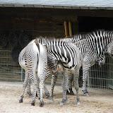 Zootour Teil 4