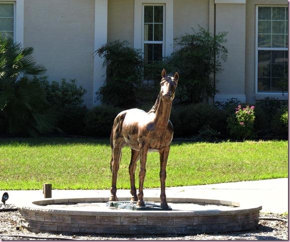 horsecloseIMG_4807