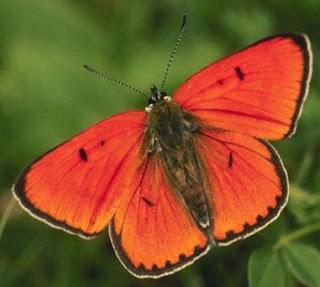 Foto de la mariposa tomada desde arriba