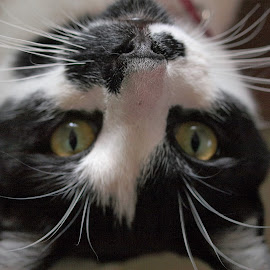 the world from a different perspective by Sue Rickhuss - Animals - Cats Portraits