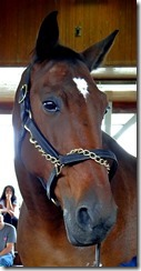 KY horse park 079