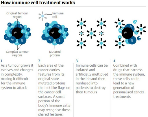 Cancer tumour genetics reveal possible treatment revolution