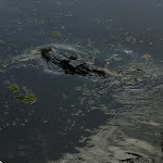 An airboat ride we took in New Orleans 07242012-15