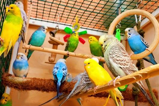 papagaili-45844577