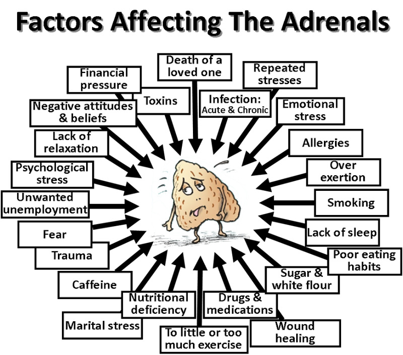 Adrenal-gland-factors