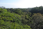 Dlinza Forest - view from the canopy
