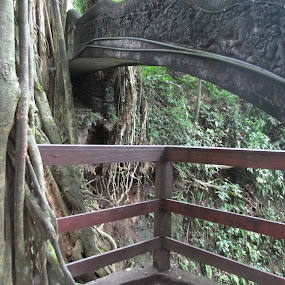 by Kim Pauly - Novices Only Landscapes ( bali, forrest, indonesia, trees, bridge, landscape,  )