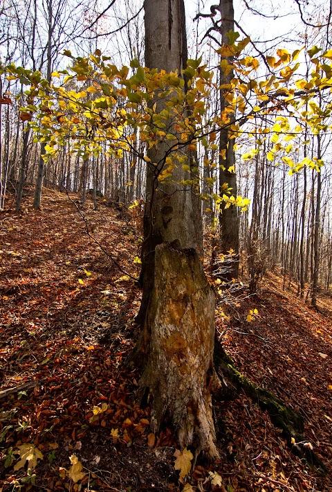 ... jesenným lesom ...