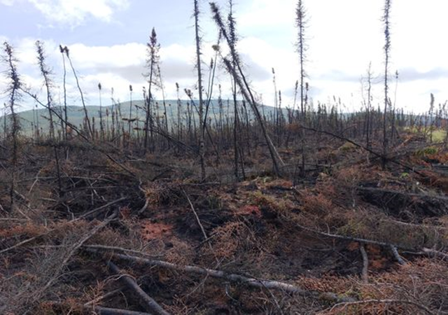 Burned trees and tundra stand out against the wide-open sky of Alaska on 3 August 2015, following the passage of the Aggie Creek Fire outside Fairbanks. Photo: Trevor Hughes / USA TODAY