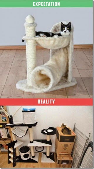 cats-expectations-reality-005