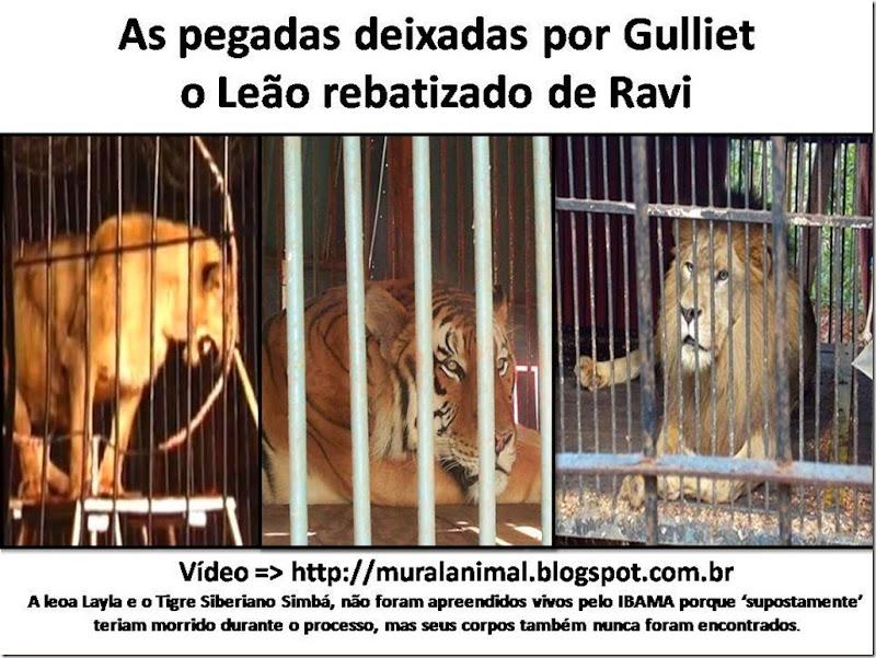 gulliet_leao_ravi